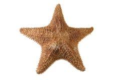 Stelle marine del mare Immagini Stock