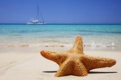 Stelle marine della spiaggia Immagini Stock Libere da Diritti