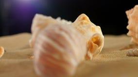 Stelle marine differenti dello shellsand del mare sulla sabbia della spiaggia video d archivio