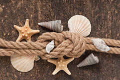 Stelle marine e coperture immagine stock