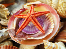 Stelle marine e coperture colorate Fotografia Stock