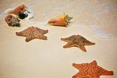 Stelle marine e coperture sulla sabbia Fotografia Stock Libera da Diritti