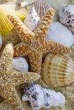 Stelle marine e coperture sulla spiaggia Fotografia Stock Libera da Diritti