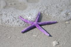 Stelle marine e mare di Surple Fotografia Stock
