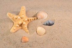 Stelle marine e primo piano delle conchiglie in una sabbia della spiaggia Immagine Stock