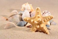 Stelle marine e primo piano delle conchiglie in una sabbia della spiaggia Immagini Stock Libere da Diritti