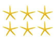 Stelle marine gialle contro priorità bassa bianca Immagini Stock