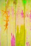 Stelle marine gialle su fondo giallo Immagine Stock