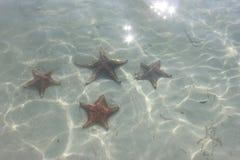 Stelle marine nell'acqua Fotografie Stock Libere da Diritti