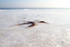 Stelle marine nell'inverno Immagine Stock