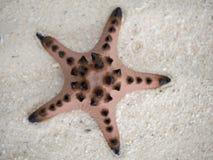 Stelle marine nella sabbia Fotografia Stock Libera da Diritti