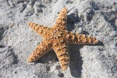 Stelle marine nella sabbia Immagine Stock