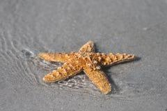 Stelle marine nella spuma Immagini Stock Libere da Diritti