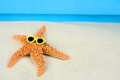 Stelle marine prendenti il sole Fotografia Stock