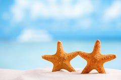 Stelle marine rosse con l'oceano, la spiaggia, il cielo e la vista sul mare Immagini Stock Libere da Diritti