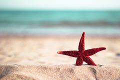 Stelle marine rosse sulla spiaggia Fotografia Stock Libera da Diritti