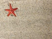 Stelle marine in sabbia Immagine Stock Libera da Diritti