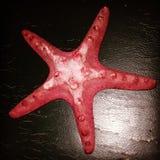 stelle marine, stella di mare Fotografie Stock Libere da Diritti