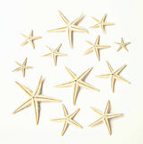 12 stelle marine su bianco Immagine Stock