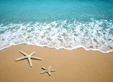 Stelle marine su una sabbia della spiaggia Immagine Stock Libera da Diritti