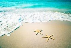 Stelle marine su una sabbia della spiaggia Retro stile dell'annata immagine stock