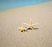 Stelle marine su una spiaggia immagini stock libere da diritti
