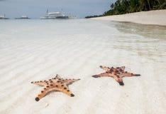 Stelle marine su una spiaggia tropicale Fotografie Stock Libere da Diritti