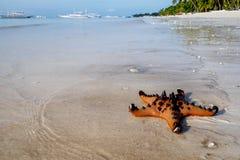 Stelle marine su una spiaggia tropicale Fotografia Stock