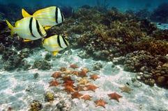 Stelle marine sul fondo dell'oceano sabbioso Fotografie Stock Libere da Diritti