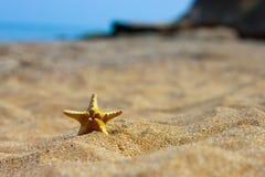 Stelle marine sulla sabbia Fotografia Stock Libera da Diritti