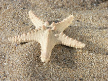 Stelle marine sulla sabbia Immagine Stock