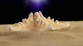 Stelle marine sulla sabbia, il nero, luce posteriore, rotazione stock footage