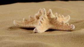 Stelle marine sulla sabbia, il nero, rotazione stock footage