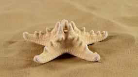 Stelle marine sulla sabbia, rotazione, pacchetto 2 archivi video
