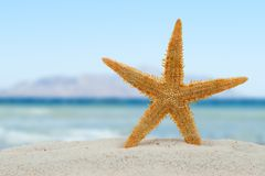Stelle marine sulla spiaggia Immagini Stock Libere da Diritti