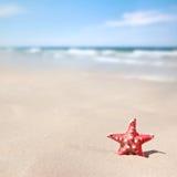 Stelle marine sulla spiaggia Fotografie Stock
