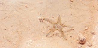 Stelle marine sulla spiaggia Fotografia Stock Libera da Diritti