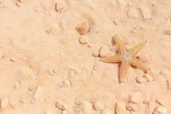 Stelle marine sulla spiaggia Immagine Stock
