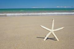 Stelle marine sulla spiaggia tropicale della sabbia bianca hawaiana Fotografia Stock