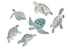 Stellen Sie Aquarellmeeresschildkröte auf weißem Hintergrund ein Exotischer Druck des Sommers stock abbildung