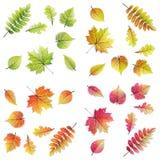 Stellen Sie 32 bunte Blätter - Herbst, Frühling ein Stockbilder