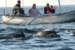 Stellen Sie die Delphine dar Lizenzfreie Stockfotografie