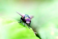 Stellen Sie die Fliege gegenüber stockfotos
