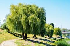 Stellen Sie die Szene der Weide und des Pfades in Querneigung von Teich dar Lizenzfreie Stockbilder
