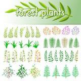 Stellen Sie Forstpflanzen ein Stock Abbildung
