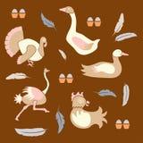 Stellen Sie Geflügelfarmvögel ein Stockbild