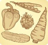 Stellen Sie Gemüse, Früchte und Beeren, Handzeichnung ein. Stockbilder
