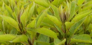 Stellen Sie Gras auf Lizenzfreie Stockfotos