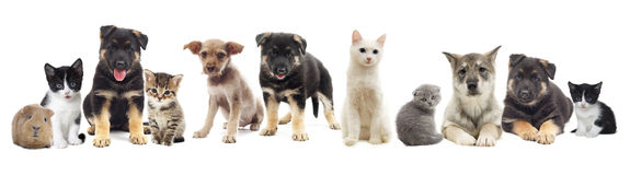 Stellen Sie Haustiere ein Lizenzfreies Stockfoto