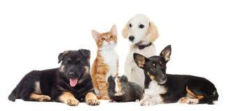 Stellen Sie Haustiere ein stockbild